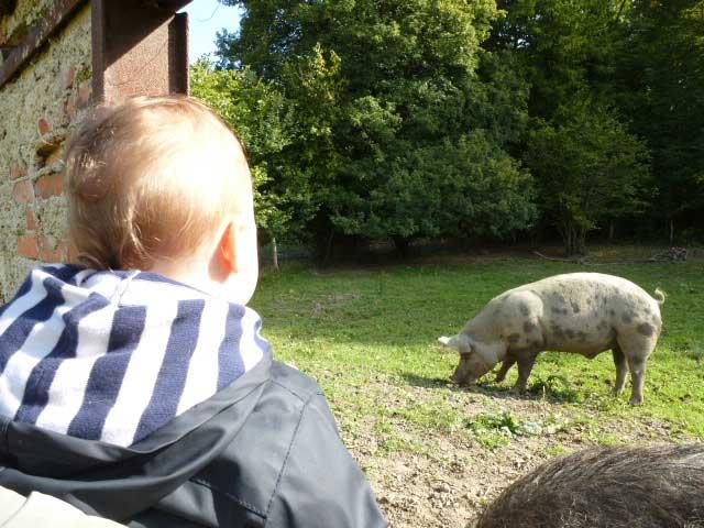 Prenez plaisir à découvrir les cochons de la ferme de la hardonnerie à Vauquois Argonne Meuse