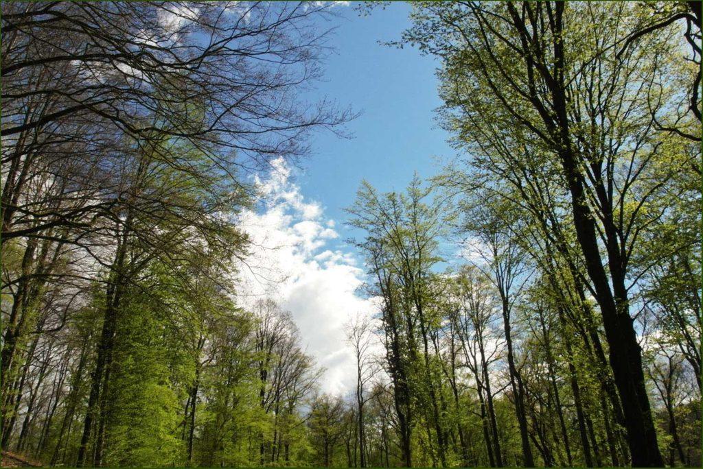 La forêt d'Argonne en Meuse