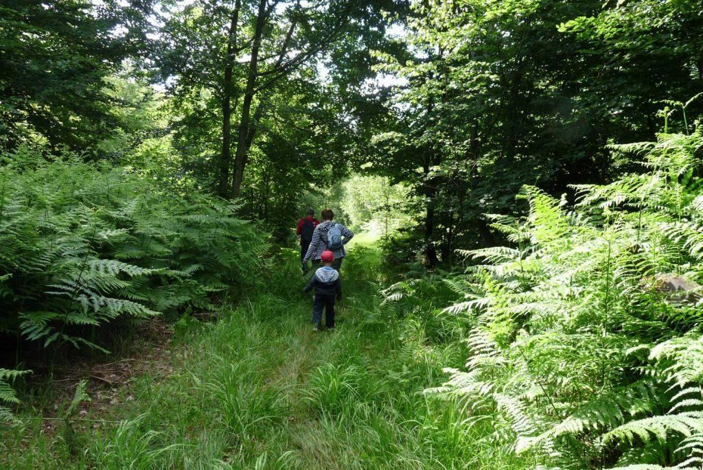Balade familiale en forêt d'Argonne