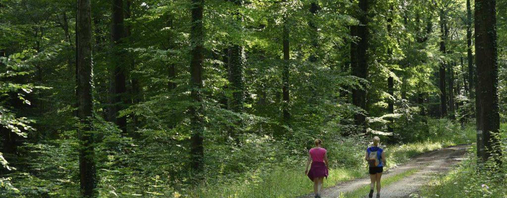Randonnée pédestre en forêt d'Argonne Meuse, destination nature